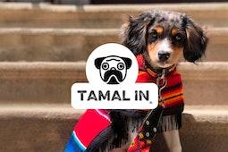 Tamal In