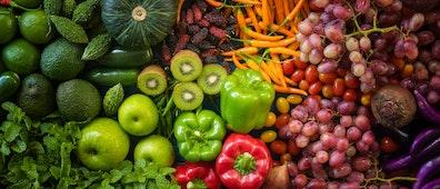 2020 El Año Internacional de la Sanidad Vegetal
