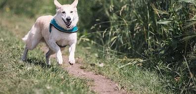 Adopta a un perrito en estas cuentas