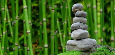Plantas para crear el jardín zen perfecto